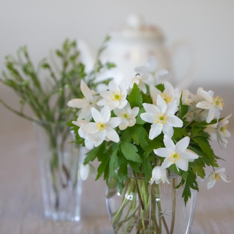 Kukkia_aidille_080516-33