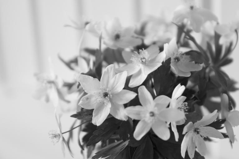 Kukkia_aidille_080516-51